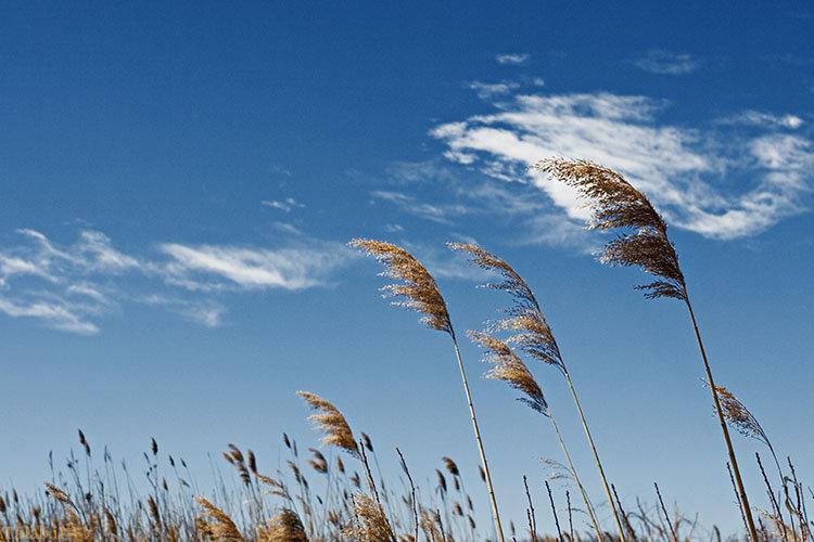 بادهای غالب